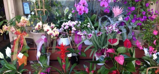 Morning Glory Florist