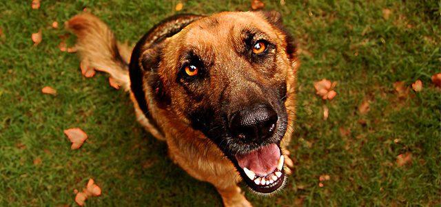 Shop Local Novato Loves National Dog Day 2016