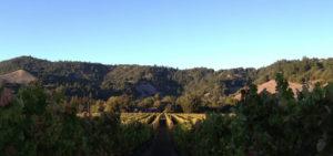 Baldassari Family Wines, Inc.